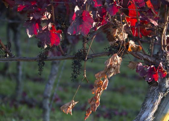 Fischingen-Herbst1082017