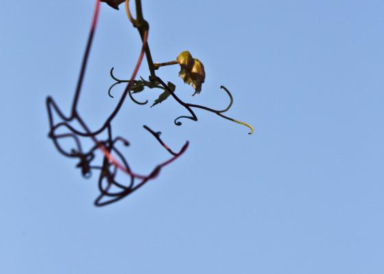 Fischingen-Herbst1102017