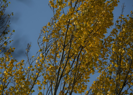 Fischingen-Herbst1222017