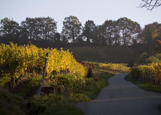 Fischingen-Herbst1322017
