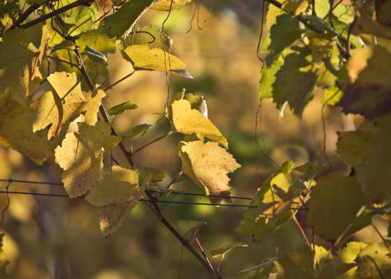 Fischingen-Herbst1522017