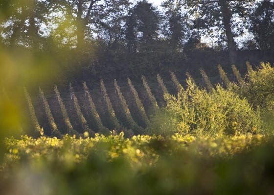 Fischingen-Herbst1752017
