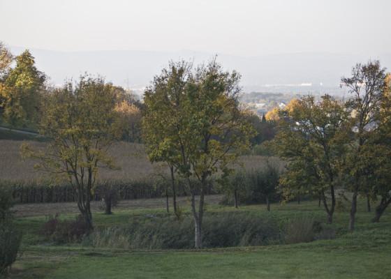 Fischingen-Herbst1712017