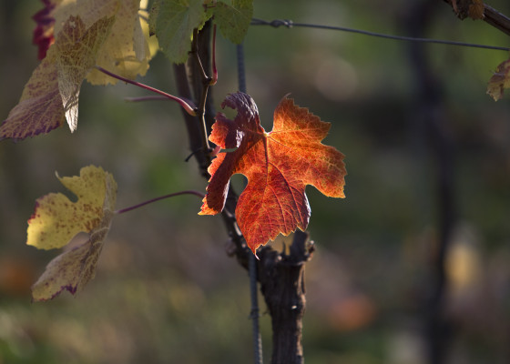Fischingen-Herbst1552017