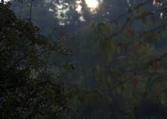 Fischingen-Herbst1112017